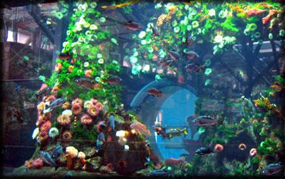 Vancouver International Airport aquarium: Make airports more fun and beautiful.