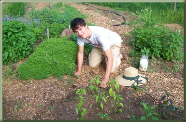 Weeding on a farm in Vermont, volunteers on organic farms.