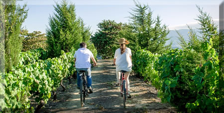 Cycling through a vineyard, Portugal.