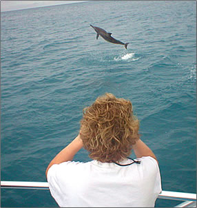 Volunteer vacation with Wild Dolphin Foundation, Oahu, Hawaii.