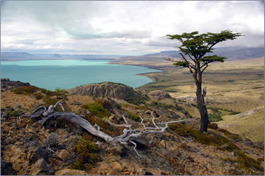 Patagonia's Lago Argentino is Argentina's largest lake.