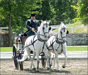 Lipizzan carriage rides at Slovenia horse farm.
