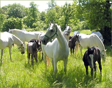 Lipica Stud Farm vacations and tours in Slovenia.