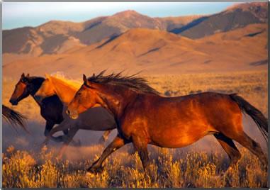 Horse photo by Nancy Bearg.