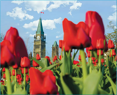 Canada's capital, Ottawa: a travel delight with year round festivals, cultural events and great outdoor options.