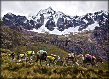 Wilderness photography: animal caravan in the mountains of Peru.