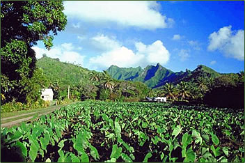 Volcanic hills overlook a plantation on Rarotonga, Cook Islands.