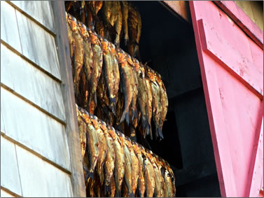Traditional herring smokehouse on Magdalen Islands, Les Iles de la Madeleine.