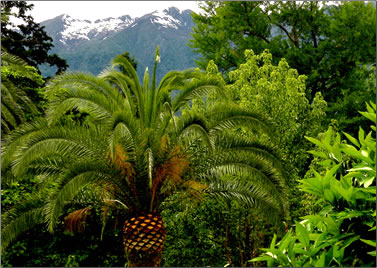 Brissago Islands botanical garden, towns and lakes of Ticino.