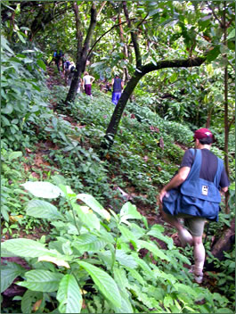 Nature exploration and hiking on Mount Tamana, Trinidad.