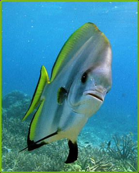 Tropical fish, Andaman Sea, Thailand best scuba diving holidays.
