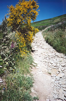 Camino de Santiago, Spain, walking path