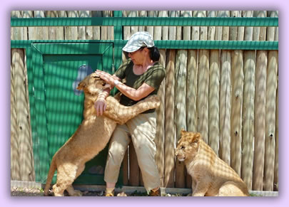 Volunteer service vacations, helping with rehabilitation of wildlife in South Africa.