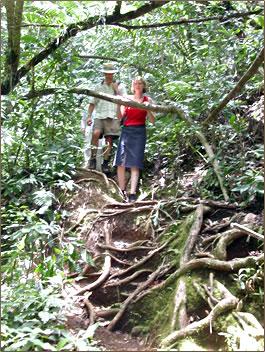 Vacationers on nature tours of Rarotonga, Cook Islands.