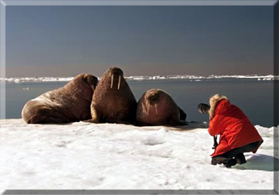 "Tour operator, Arctic Kingdom, offers ""Kings of the Arctic"" safaris in Canada's High Arctic out of Igloolik, Nunavut."