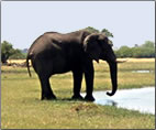 Article on walking safari in Okavango Delta, Botswana.