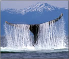 Article about whale watching in five regions of the world.