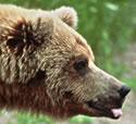 Bear watching vacations.