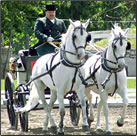 The historic Lipizzan Horse Farm in Slovenia is inspiring and exciting for family vacations.