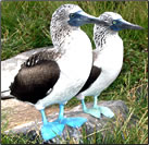 Article about best bird watching small ship cruises around the world.