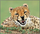 Article on African Wildllife Photography Tips.