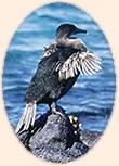Galapagos Islands: senior travel nature vacations.