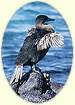 Galapagos Islands, Travel articles Peru Ecuador.