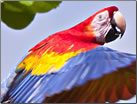 Article about Costa Rica's Top Nature Parks.