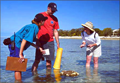 Australia's Great Barrier Reef monitoring coral bleaching.