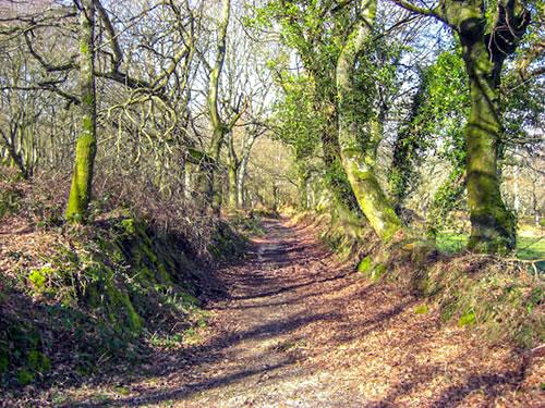Camino Primitive: from Oviedo and Santiago de Compostela.