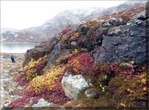 Tundra rock garden.
