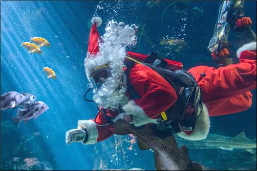 Scuba Santa comes to town!