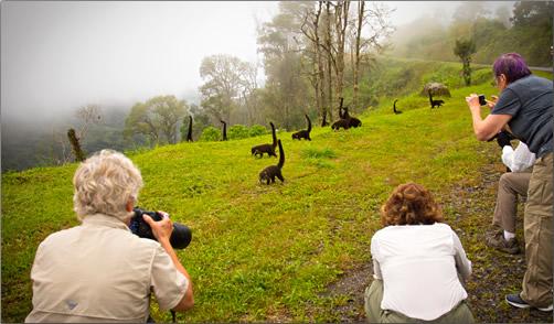 Costa-Rica-Photographing-Coatimundi