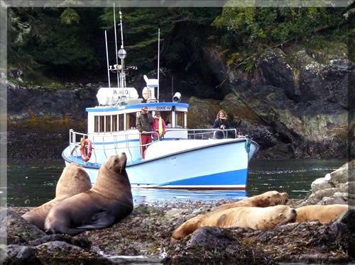 Subtidal-Adventures-Tour-Boat