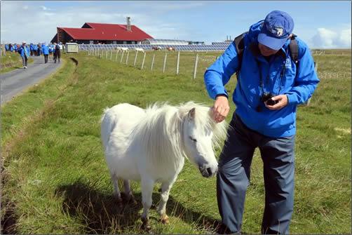 Scotland-Foula-Island-Shetland-Pony