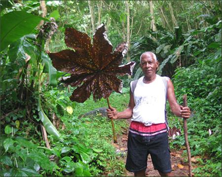 Grenada-Hiking-Guide