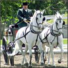 Button-Slovenia-Horses