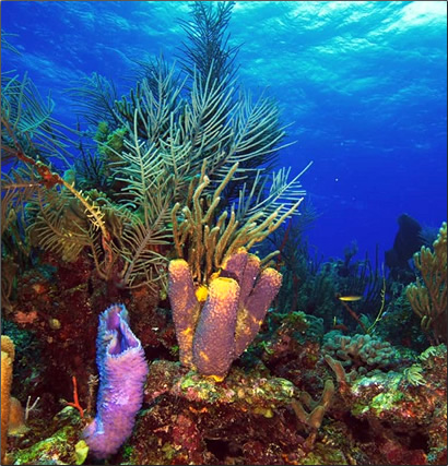 Belize-Coral-Formations