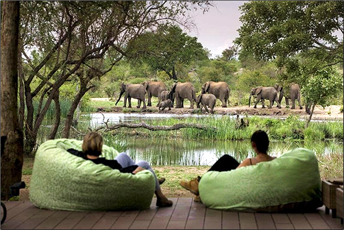 South-Africa-Eco-Lodge-Elephant-Watching