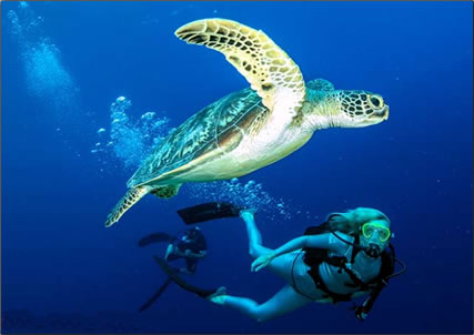 Palau-Sea-Turtle