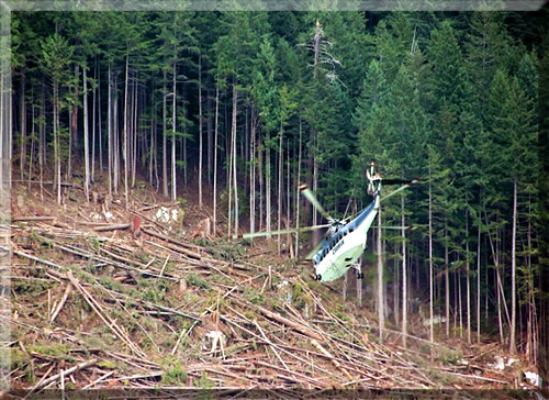 Helicopter-Logging