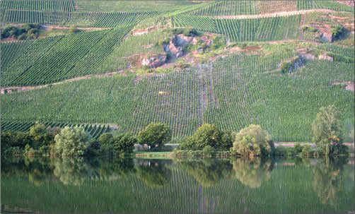 Moselle-River-Vineyards