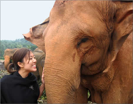 Rescued-Asian-Elephant