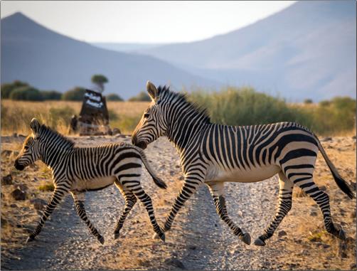 Desert-Rhino-Camp-Namibia