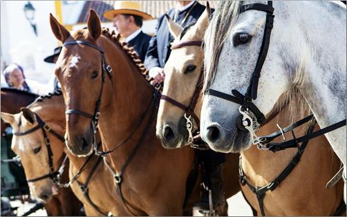 Golega-Horses-Portugal