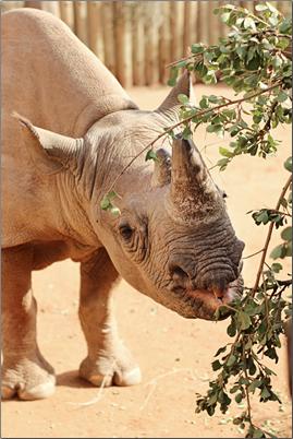 Ol-Pejeta-Conservancy-Kenya