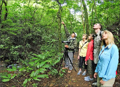 Costa-Rica-Forest-Walk-Austin-Adventures