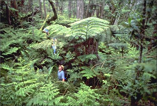 Hawaii-Forest-&-Trail-Birdwatching-Tour
