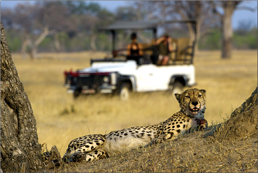 Kenya-Wildlife-Safari-Austin-Adventures