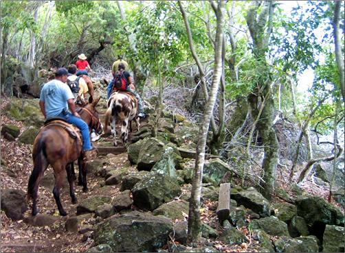 Molokai-Mule-Ride
